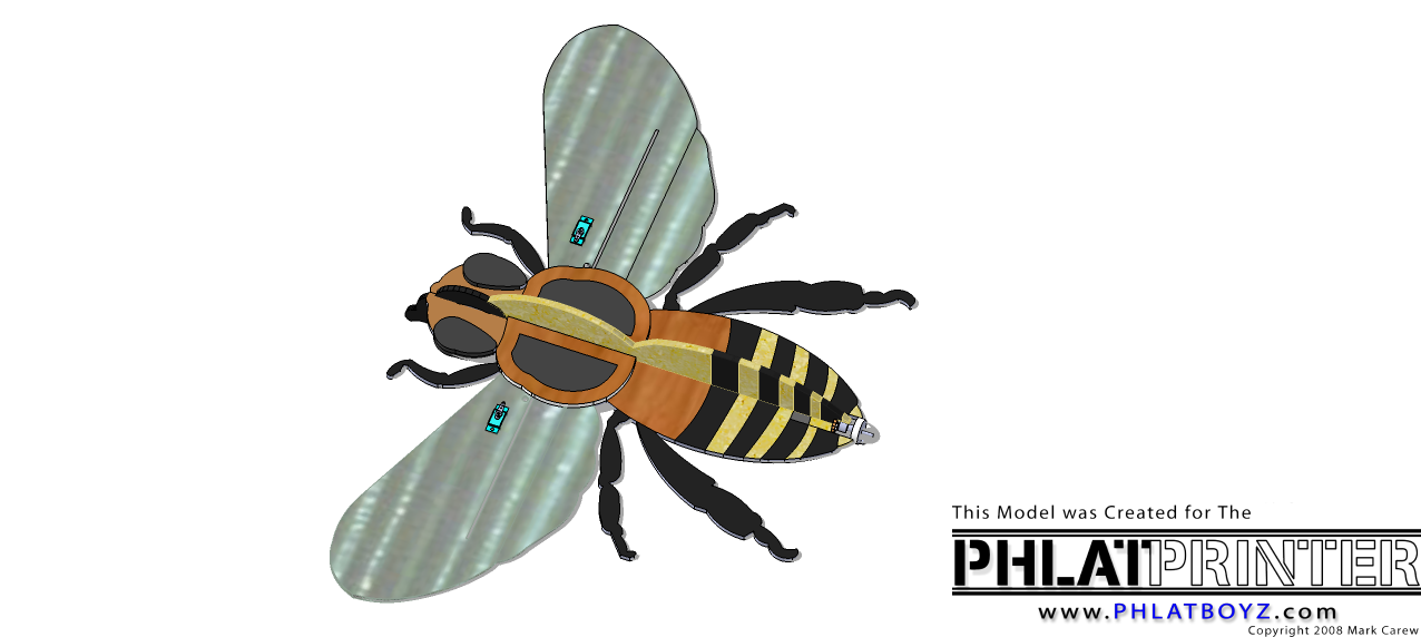 Honey Bee Colored..png